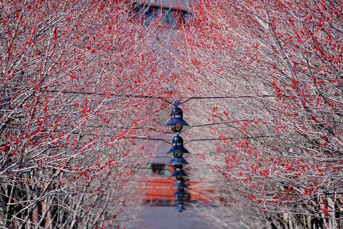 春の始まり_a0274805_23125954.jpg