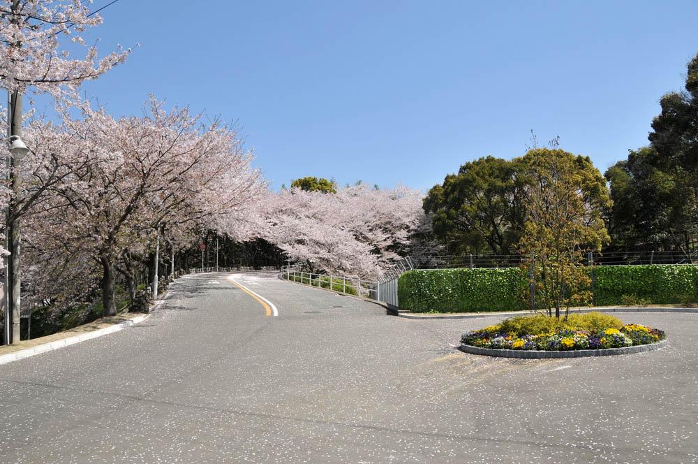 福女短・福岡国際大の桜 2014_a0042310_1139697.jpg