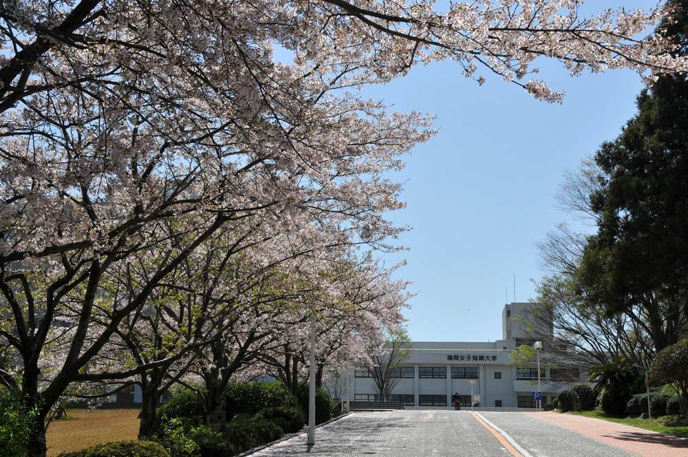 福女短・福岡国際大の桜 2014_a0042310_11434196.jpg