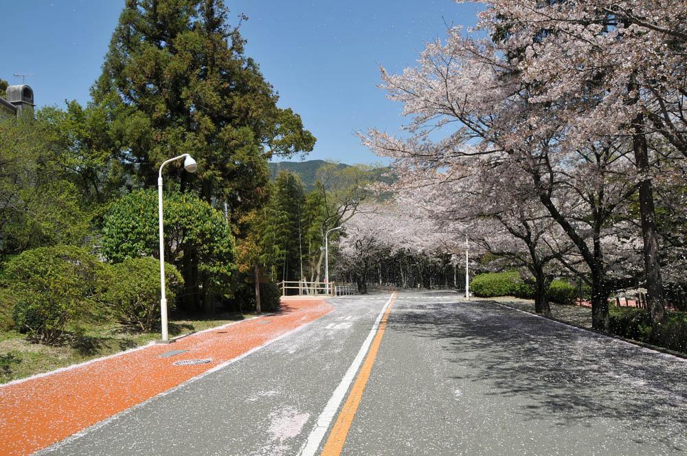 福女短・福岡国際大の桜 2014_a0042310_11441679.jpg
