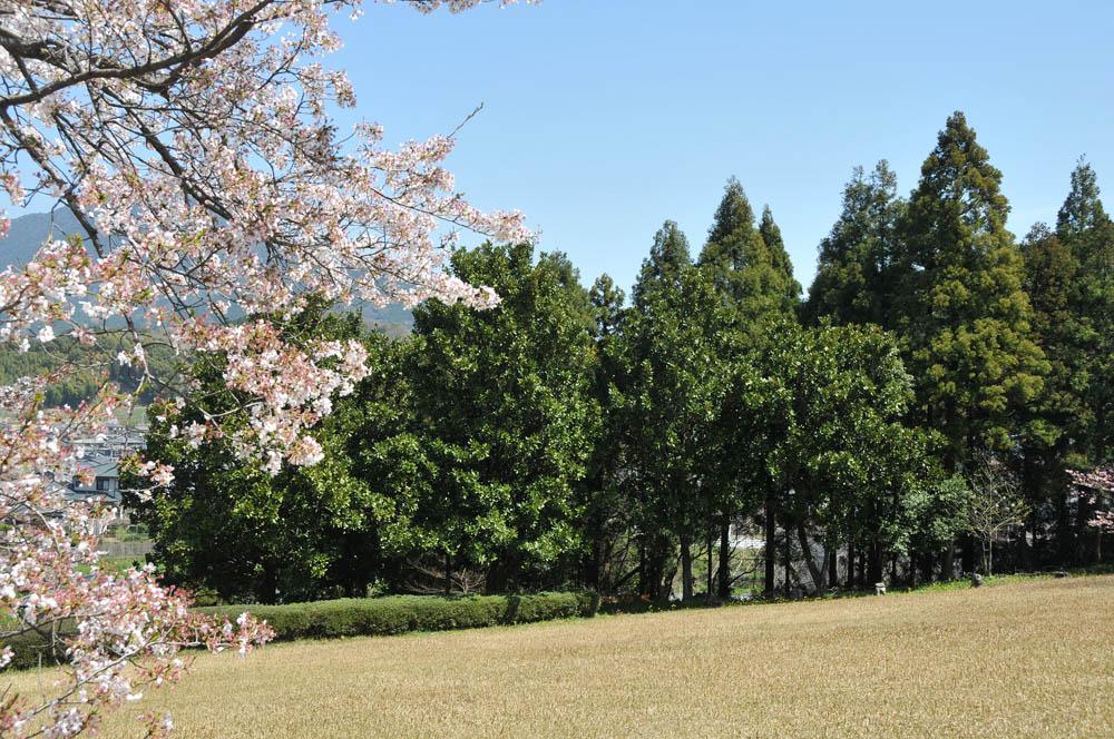 福女短・福岡国際大の桜 2014_a0042310_11443629.jpg