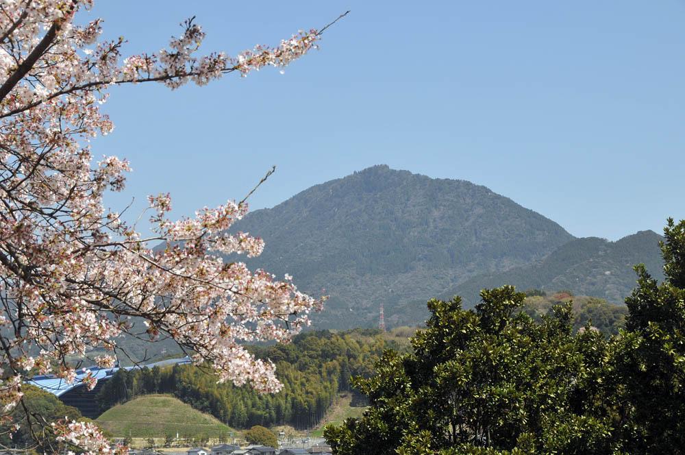 福女短・福岡国際大の桜 2014_a0042310_1146275.jpg