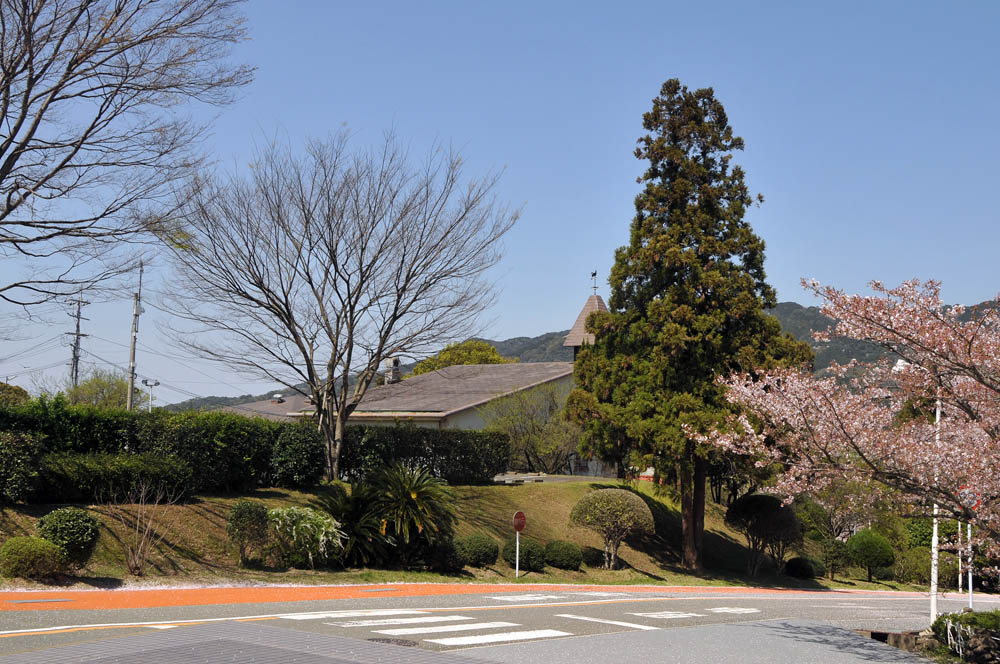 福女短・福岡国際大の桜 2014_a0042310_11474273.jpg