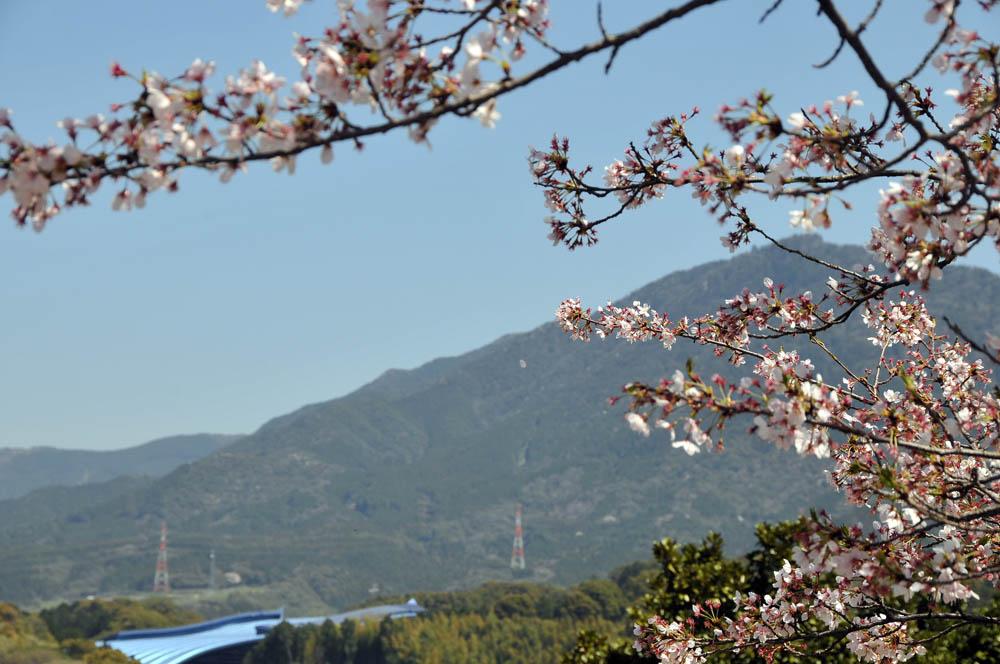 福女短・福岡国際大の桜 2014_a0042310_1147669.jpg