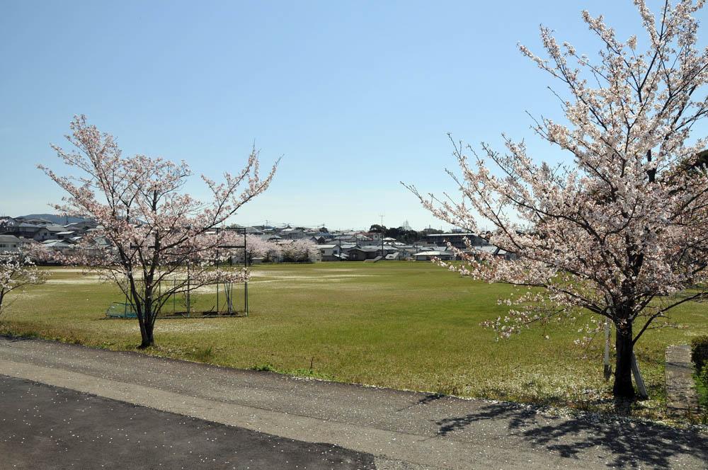 福女短・福岡国際大の桜 2014_a0042310_1150155.jpg