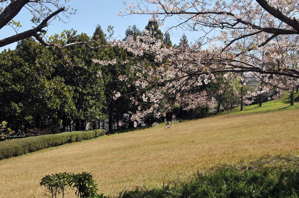 福女短・福岡国際大の桜 2014_a0042310_11505746.jpg