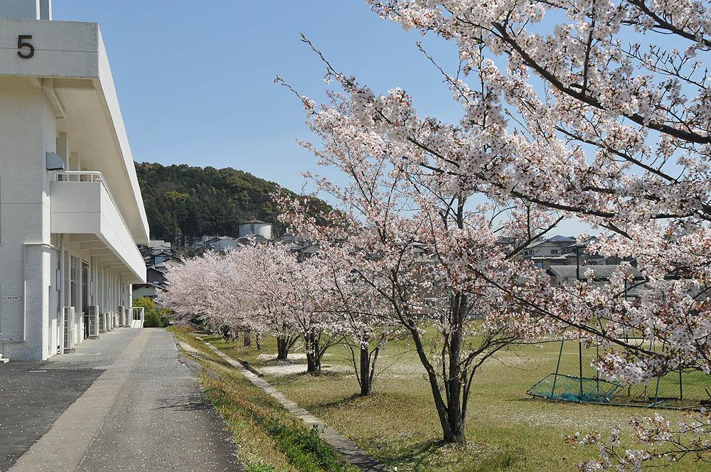 福女短・福岡国際大の桜 2014_a0042310_1150649.jpg