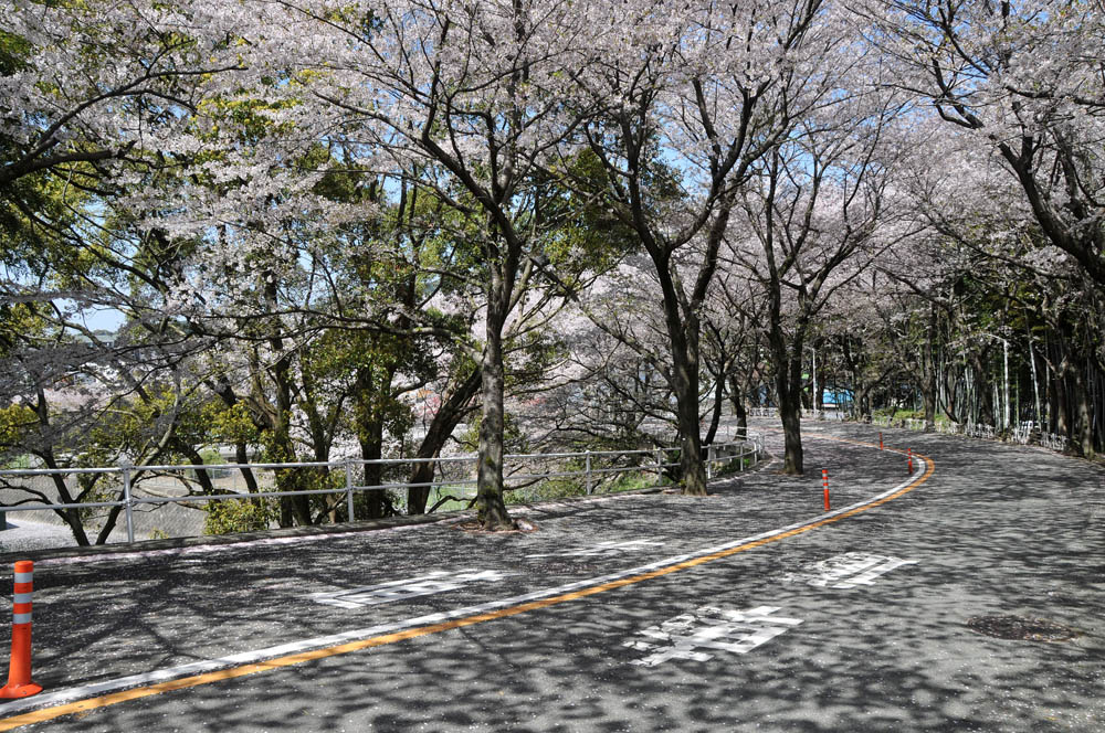 福女短・福岡国際大の桜 2014_a0042310_1154209.jpg