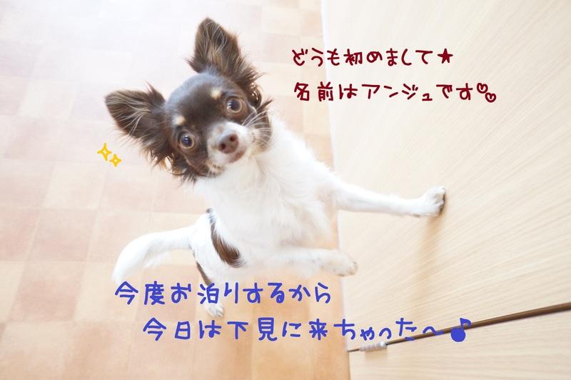 d0220513_1525539.jpg