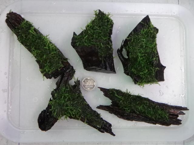 140410 熱帯魚・水草_f0189122_1313720.jpg