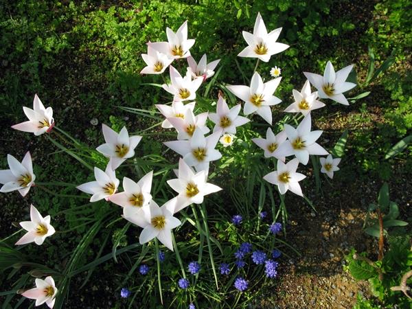 春・爛漫_f0129726_2156656.jpg