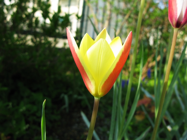 春・爛漫_f0129726_21592859.jpg