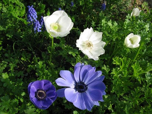 春・爛漫_f0129726_22113100.jpg