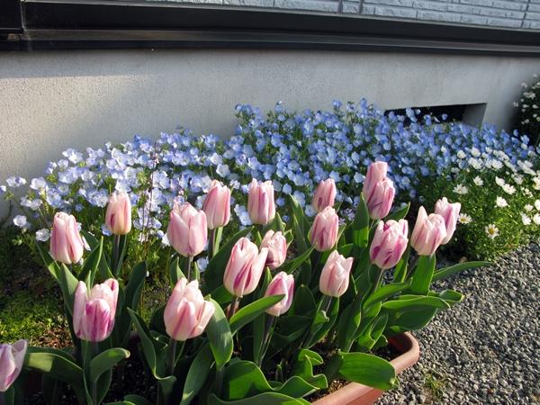 春・爛漫_f0129726_2217223.jpg