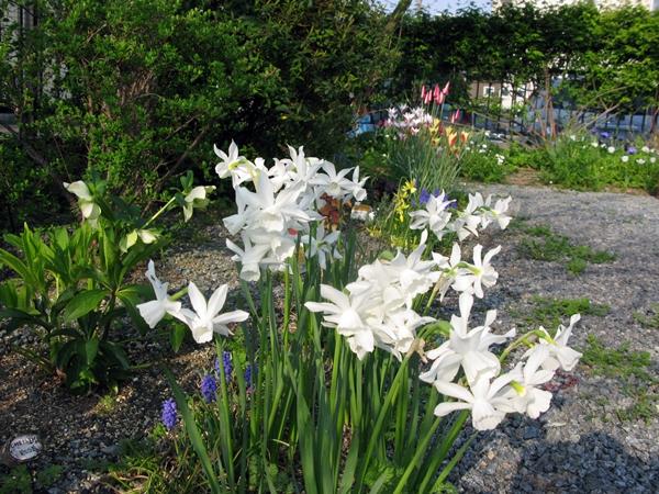 春・爛漫_f0129726_2242342.jpg