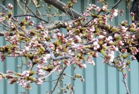 花だより_b0142728_1640127.jpg