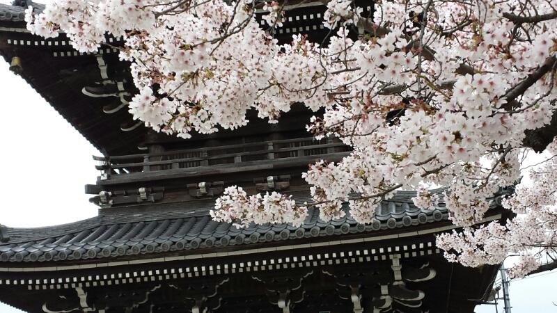 水間寺の桜_f0330437_2353287.jpg