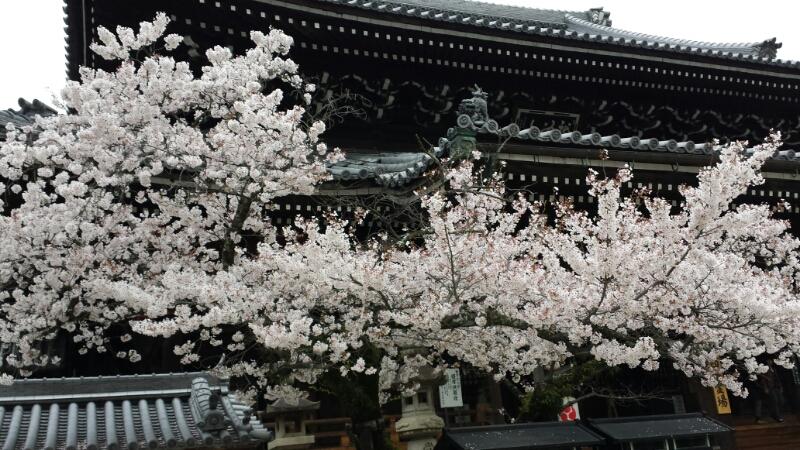 水間寺の桜_f0330437_2363839.jpg