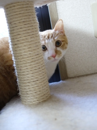 猫のお友だち ひめくんびびちゃん編。_a0143140_21465017.jpg