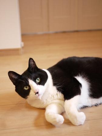 猫のお友だち ハナくん編。_a0143140_2291746.jpg