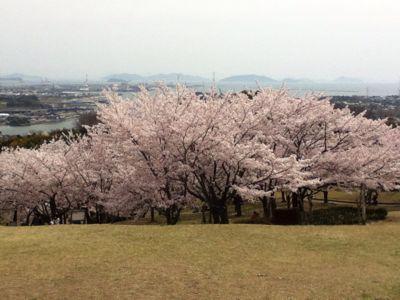 お花見(^_^)_a0111845_9415847.jpg