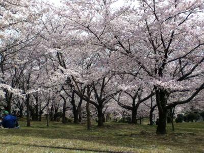 お花見(^_^)_a0111845_9415973.jpg