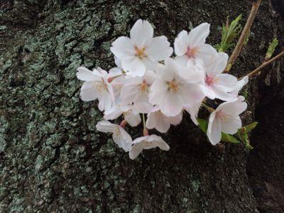 旦那さんとお花見🎵_a0153945_22435941.jpg