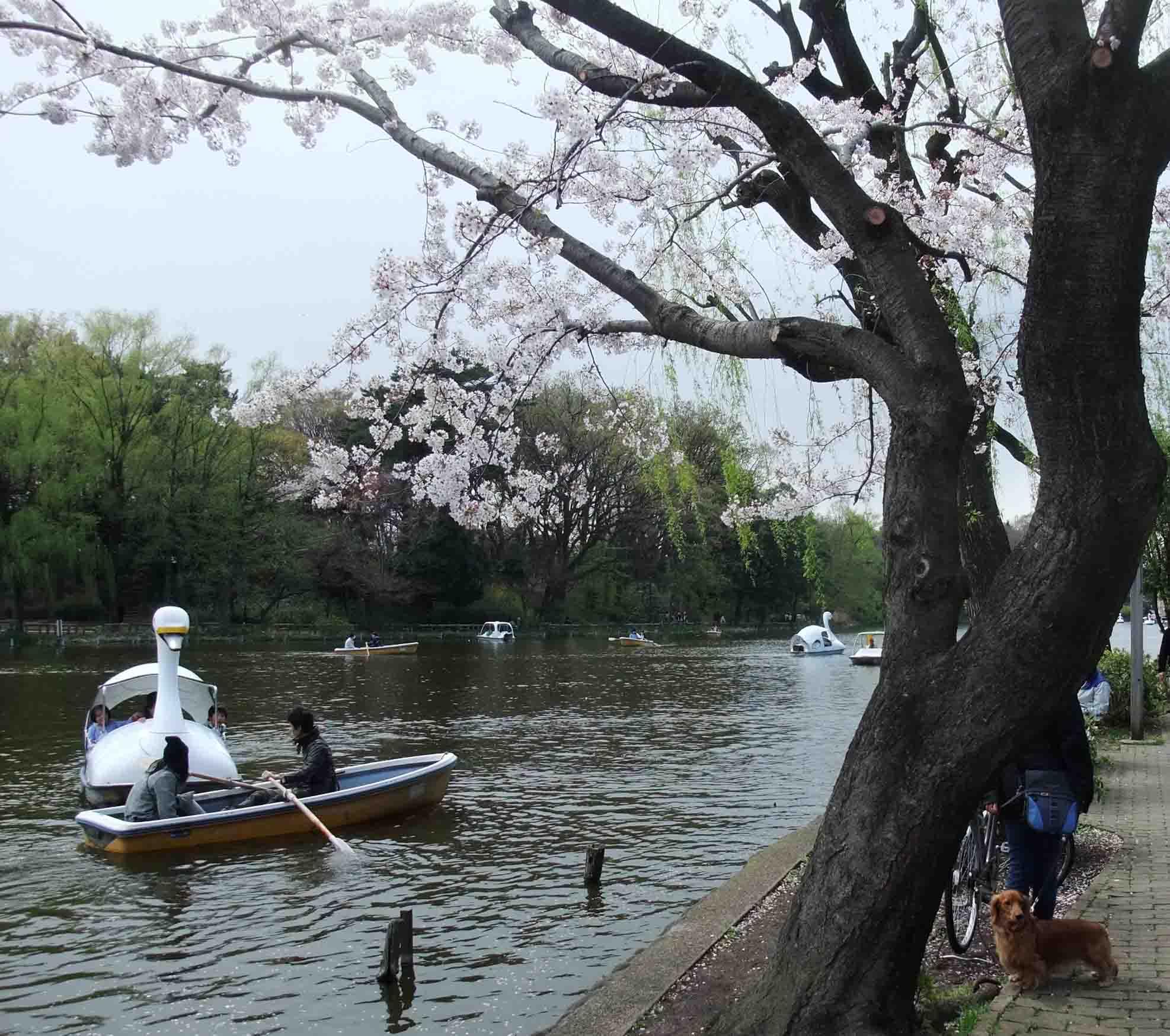 石神井公園 の いろいろ_c0307053_19344422.jpg