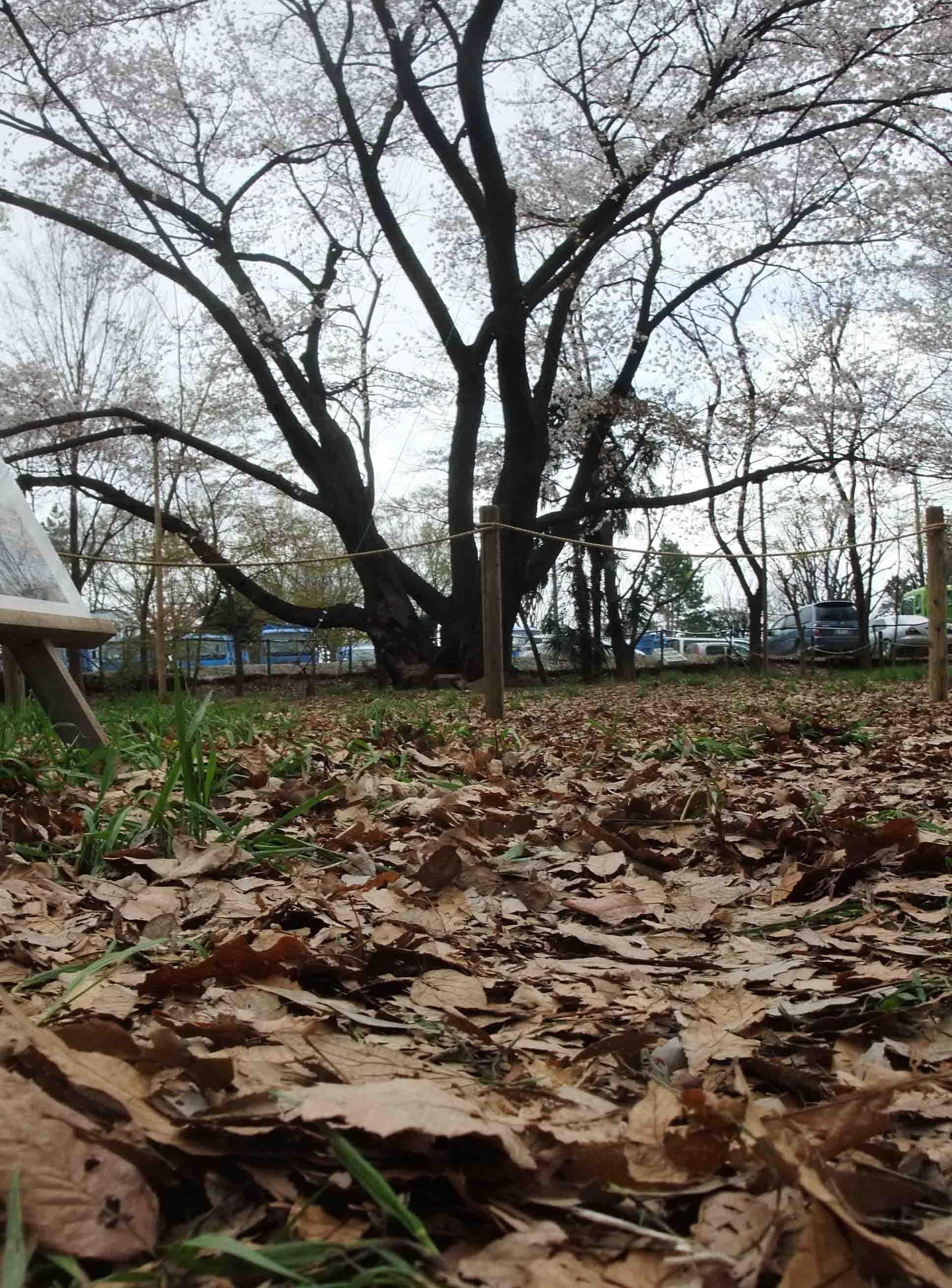 石神井公園 の いろいろ_c0307053_19361414.jpg