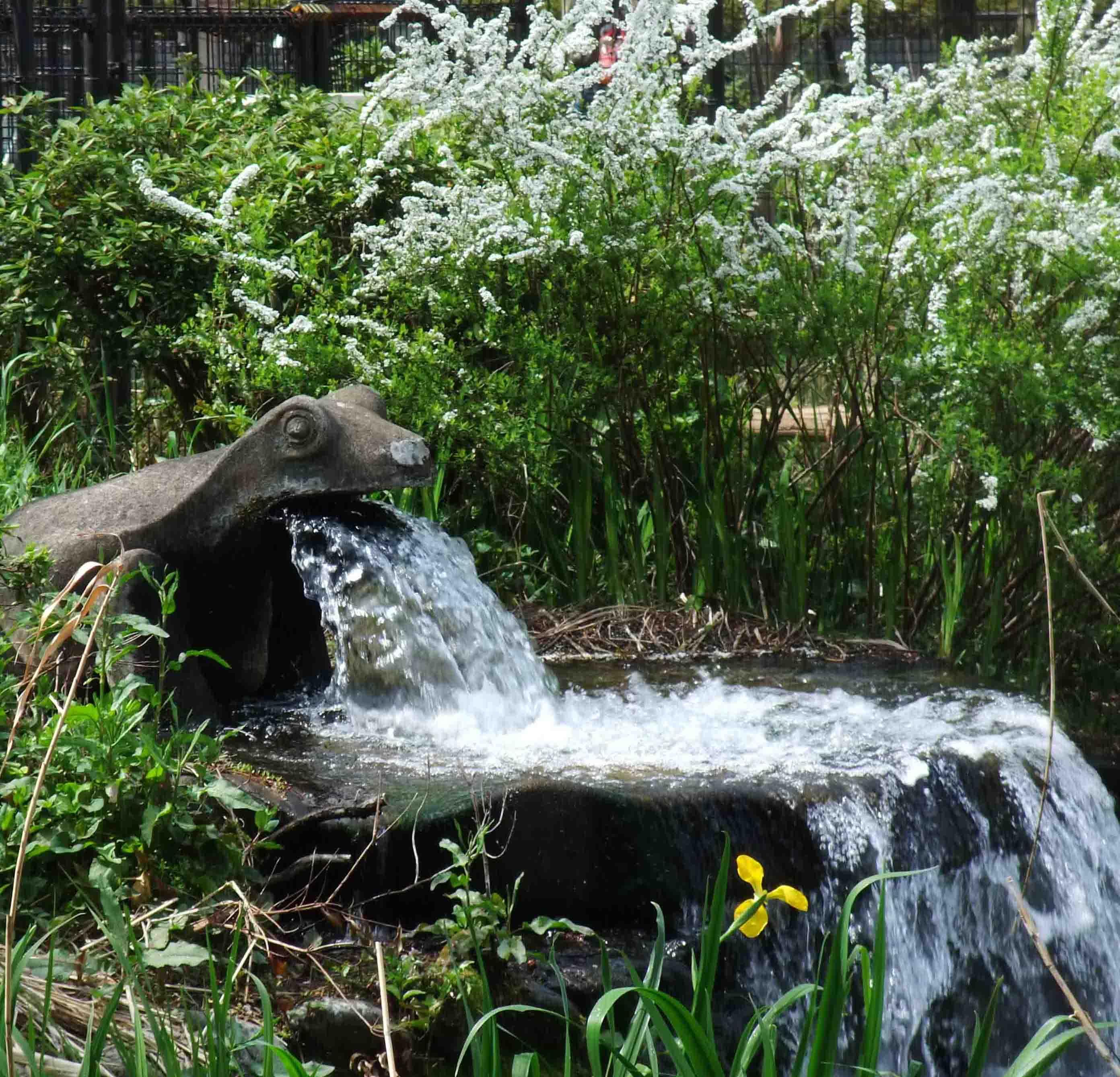 石神井公園 の いろいろ_c0307053_19364967.jpg