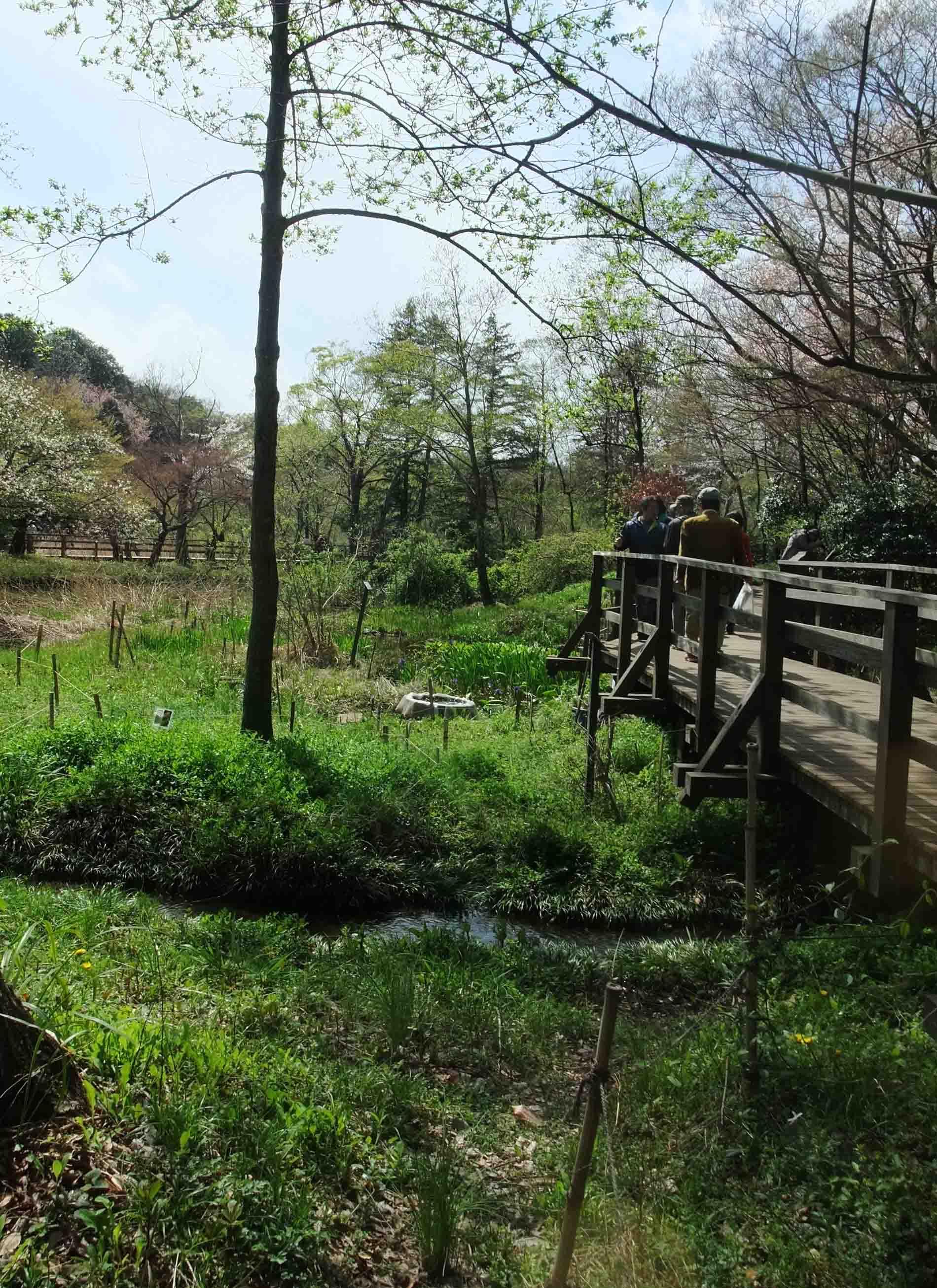 石神井公園 の いろいろ_c0307053_19375112.jpg