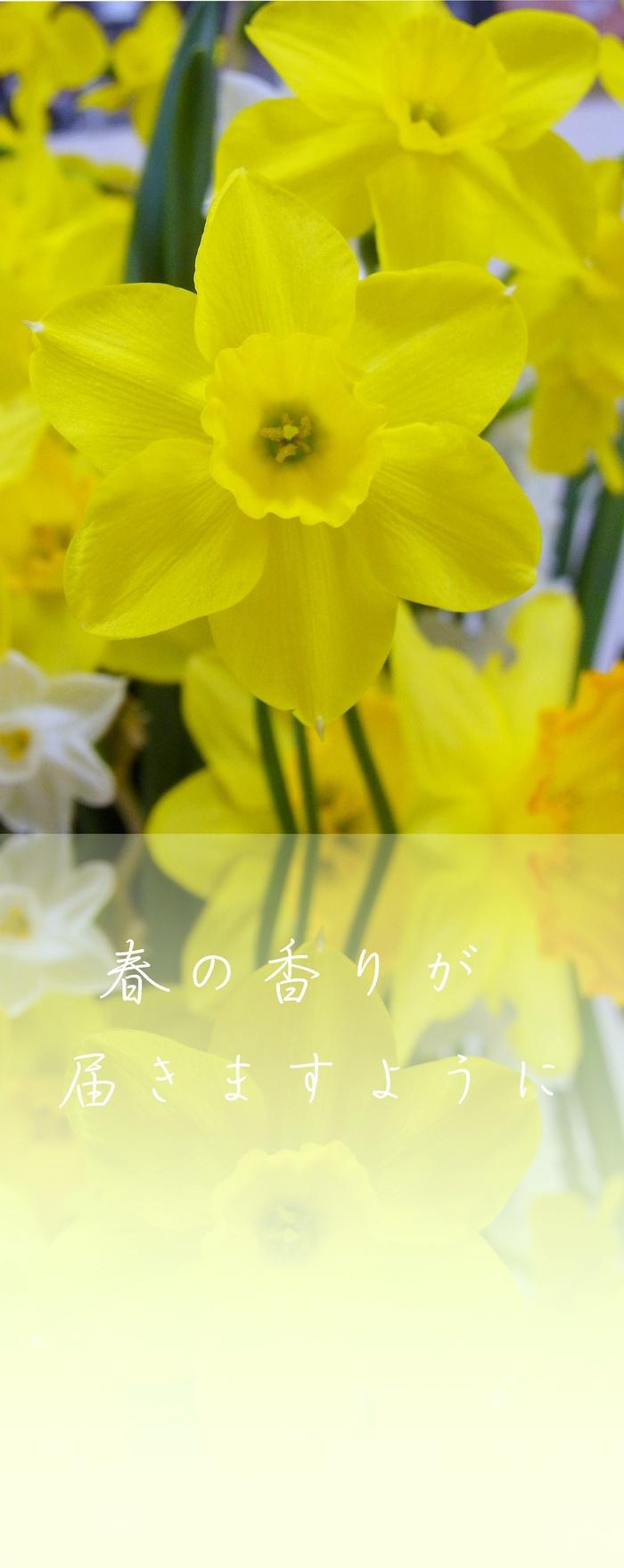 d0199578_0523080.jpg