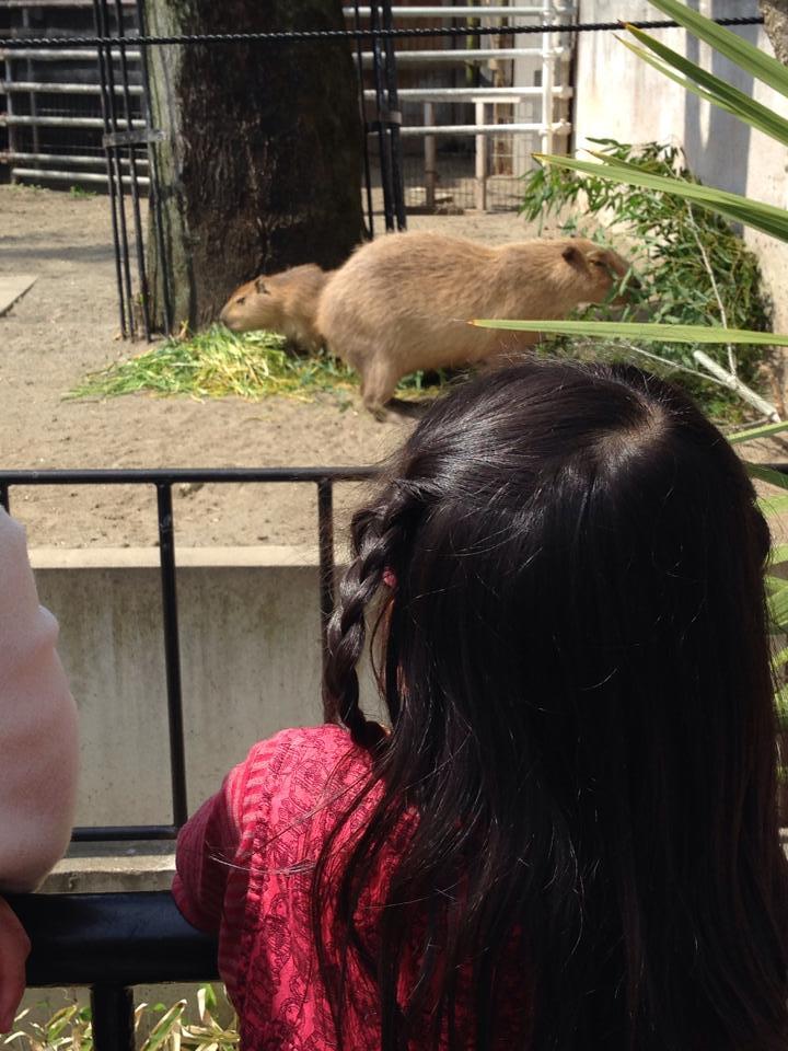 Ueno zoo_b0195783_10550579.jpg