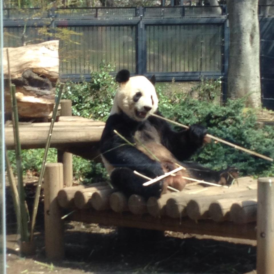 Ueno zoo_b0195783_10550624.jpg