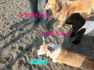 おニューウェアとフルールちゃん_e0222588_17462785.jpg