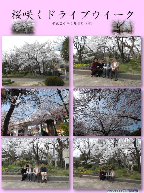 桜咲くドライブウィーク<アクティブライフ中山倶楽部・デイサービス>_c0107602_14394017.jpg