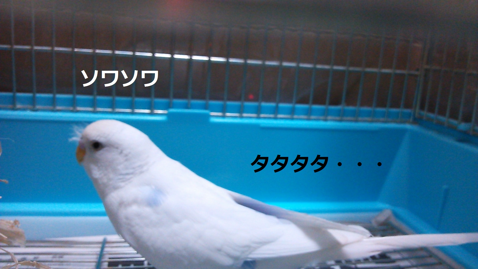 c0322903_00013417.jpg