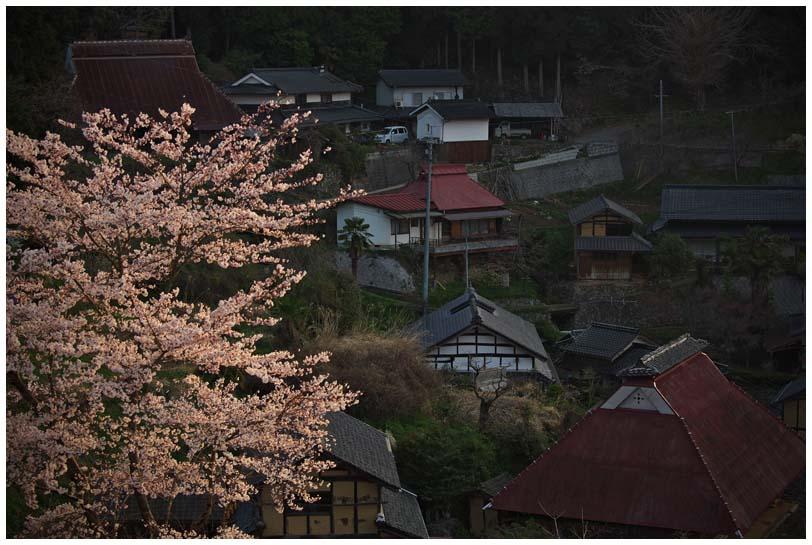 醍醐桜_d0272207_20264651.jpg