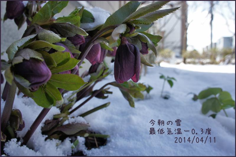 季節が冬に逆戻り・・・_b0019313_17594896.jpg