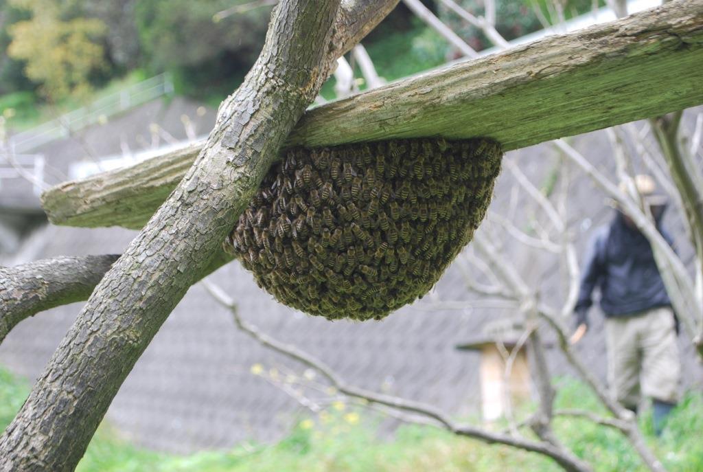 金稜辺に蜂が寄るということは・・・_f0176521_19263811.jpg