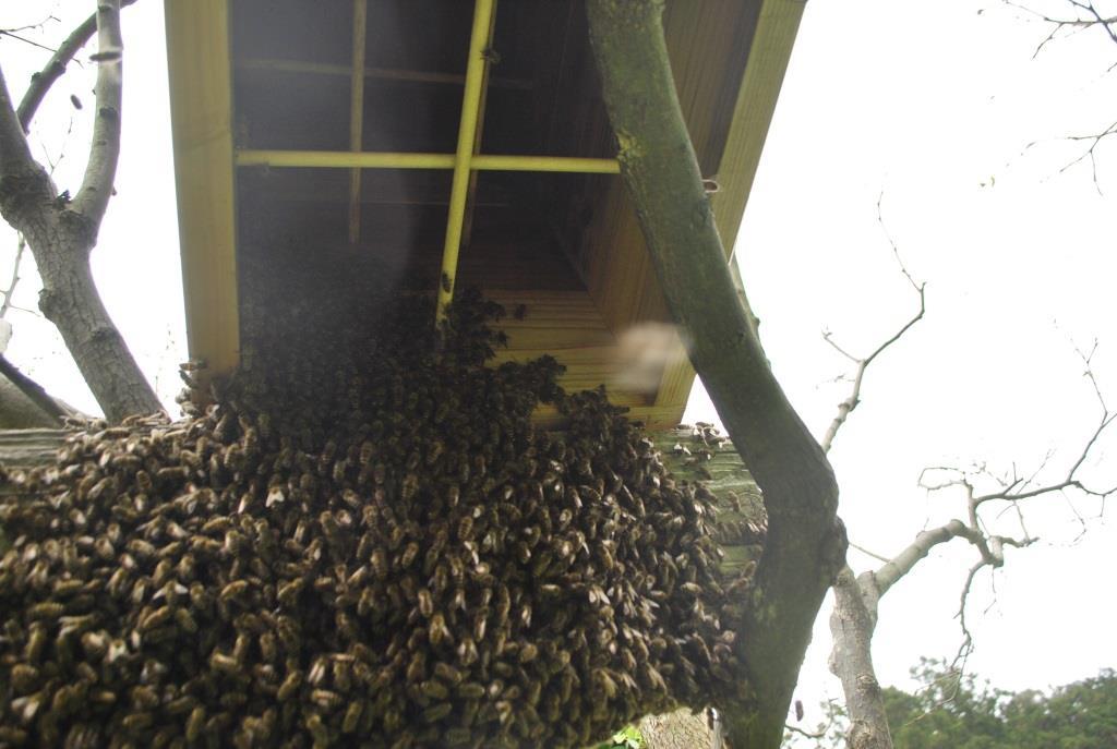 金稜辺に蜂が寄るということは・・・_f0176521_1927968.jpg