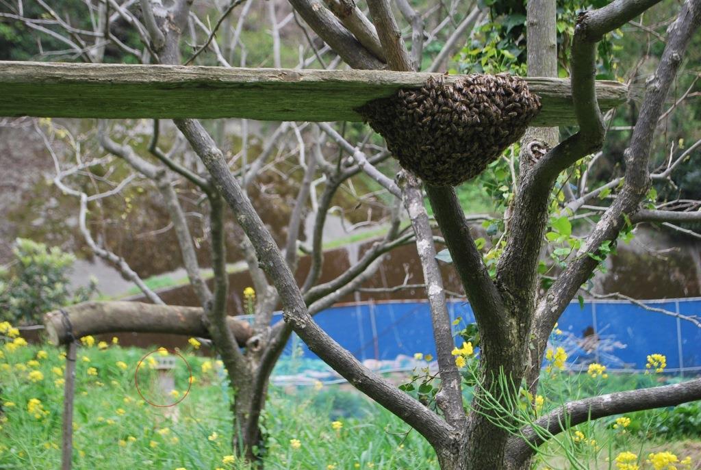 金稜辺に蜂が寄るということは・・・_f0176521_194742.jpg