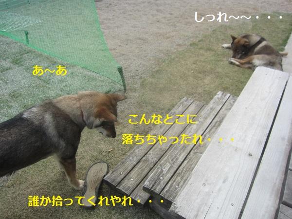 f0143123_21184715.jpg