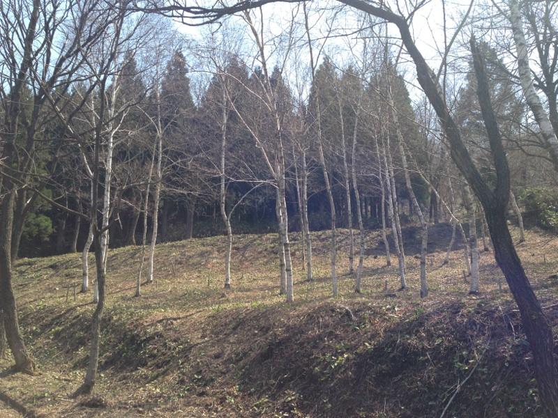 八ッ杉千年の森の春☆_e0061225_14523061.jpg