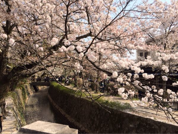 京都でお花見2014_e0292546_0342178.jpg