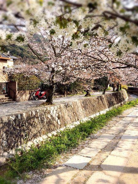京都でお花見2014_e0292546_0342364.jpg