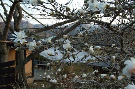 春ですね_d0249047_17443226.jpg