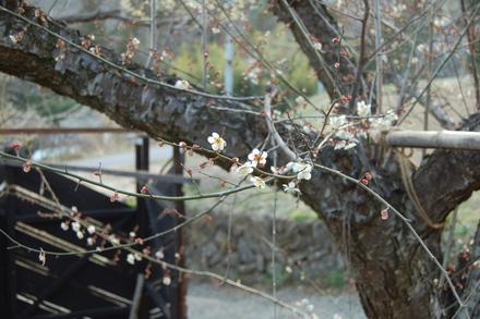 春ですね_d0249047_17494313.jpg