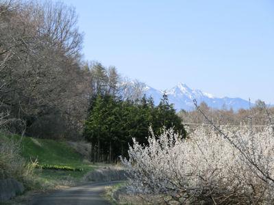 新府の桃は4分咲き_f0019247_22553576.jpg