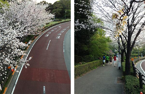 Sweet home Tokyo 91 竹橋_a0003650_22575567.jpg